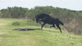 Watch This Horse Deliver A Can Of Whoop Ass To A Huge Alligator Just Because It Can