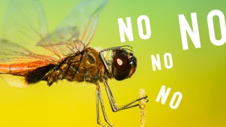 Female Dragonflies Are Faking Their Death To Avoid Males And The Internet Is Like, We Feel You Girl