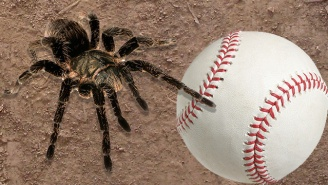 A New, Softball-Sized Spider Was Discovered To Remind You That Nature Is Terrifying