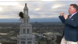 A Weatherman Barely Survives A Giant Spider Attack In April's Best News Bloopers