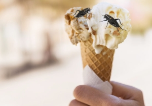 You Can Get Your Cricket Fix In A Scoop Of Ice Cream Now