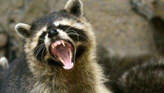 Everyone Is Talking About This Badass Girl Who Drowned A Rabid Racoon With Her Bare Hands