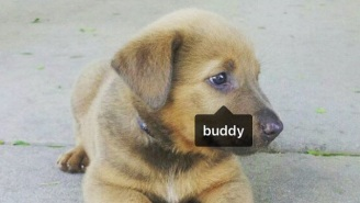 The Compton Rapper 'Buddy' Keeps Getting Tagged In Adorable Instagram Pics Of Dogs Who Share His Name