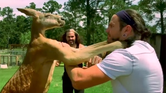 The Broken Hardys Apparently Broke Into A Zoo To Film One Of Their Impact Segments