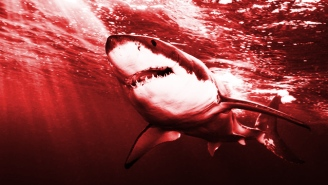 A Search For Great White Sharks, Off The Coast Of Cape Cod