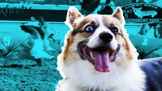 How Running In The National Corgi Derby Helped Heal A Deep Wound