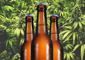 What Are Cannabis Terpenes And Why Are Brewers Adding them To Beer?