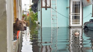 Thousands Of Puerto Ricans Must Leave Their Pets Behind Due To A Federal Ban Enforced By Airlines