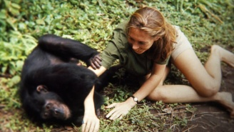 'Jane' Pays Tribute To Jane Goodall's Revolutionary Studies Of Chimp Life