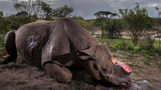 The Wildlife Photo Of The Year Is A Haunting Reminder Of Poaching