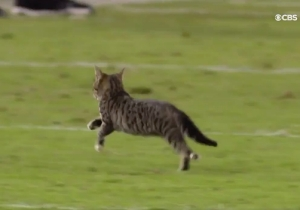 Tony Romo Doing Color Commentary For A Cat On The Field Was The Best Part Of Thursday Night Football