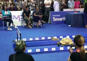 A Tortoise Raced A Hare And Finally Settled An Age-Old Grudge Match