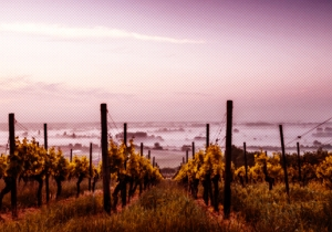 There's Never Been A More Important Time To Visit California Wine Country