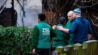A Massive Fire At The London Zoo Results In The Death Of A Cherished Aardvark