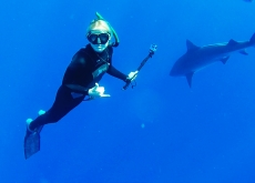 Does Humanity's Future Depend On Sharks?