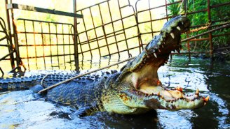 How Australia's 'Monster Croc Wrangler' Charts A New Path For Animal Conservation