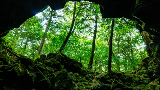 The Cultural Impact Of Visiting Aokigahara — Japan's 'Sea Of Trees'