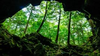The Cultural Impact Of Visiting Aokigahara — Japan's 'Sea Of Trees'