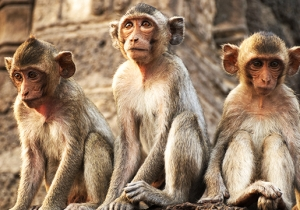 Chinese Scientists Claim To Have Cloned Monkeys, So Are Humans Next?