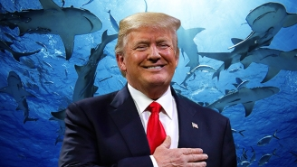 Trump's Alleged Fear Of Sharks Has Led To Big Donations To Shark Charities