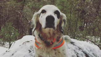 A Brave Dog Named Pete Died Saving His Owners From A Black Bear