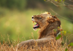 A Suspected Poacher Was Killed And Eaten By Lions In South Africa