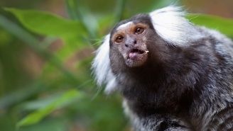 Monkeys Tripping Out On Ayahuasca May Have Stumbled Upon An Effective Treatment For Depression