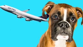 After A Puppy Died On A United Airlines Flight, A GOP Senator Is Proposing A Bill To Protect Pets From Airlines