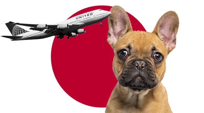 united dog japan