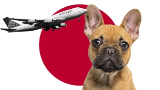 United Made Another Massive Animal Error, Accidentally Flying The Wrong Dog To Japan