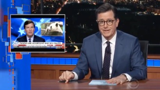 Stephen Colbert Roasts Tucker Carlson For Stealing His Bit With The 'Sex-Crazed' Pandas Segment