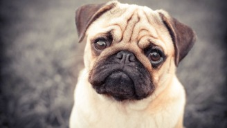 A Man Fined For A Hate Crime By Filming His Pug Doing Nazi Salutes Has Triggered A Free Speech Debate