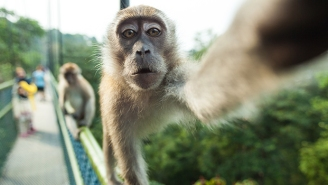 The 'Selfie Monkey' And His Photographer Are Getting A Biopic