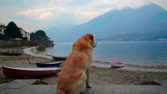 Try Not To Cry While Watching The Trailer For Netflix's 'Dogs' Documentary Series