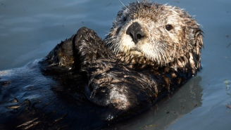 A California Aquarium Had To Issue An Apology After Fat-Shaming An Otter