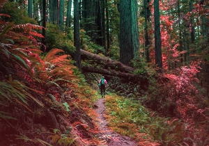 Take A Hike, San Francisco: The Redwoods And The Coastal Cliffs
