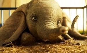 Weekend Box Office: 'Dumbo' Sputters, But Matthew McConaughey Crash Lands