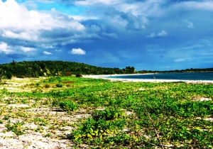 Puerto Rico's Vieques Island Offers A Chance To See Paradise And Help Hurricane Recovery