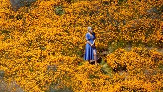 How To See The Super Bloom Without Hurting The Environment