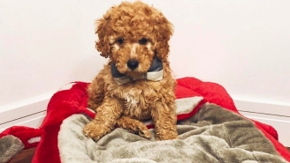 Joel Embiid's New Puppy Is Named After Sam Hinkie (And A 'Vampire Diaries' Character)