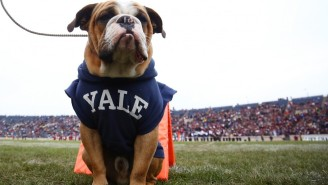 The Yale Coach Involved In The Bribery Scandal Also Allegedly Had Players Write Papers For Him