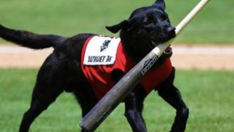 A Minor League Umpire Got Booed For Being A Jerk To A Dog