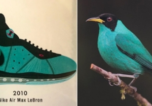 Someone Started An Amazing Twitter Thread Comparing Popular Sneakers To The Birds That Look Like Them