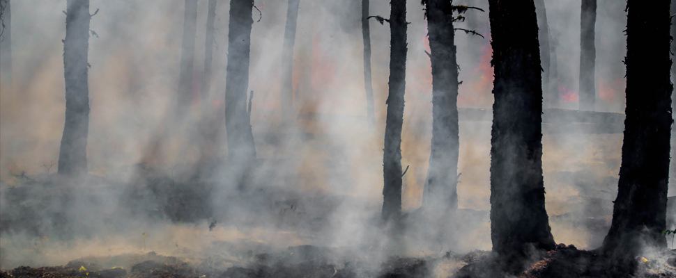 A Trail Expert Guides Us Through How They Recover Trails After A Fire