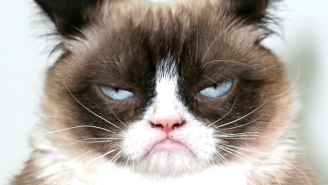 Grumpy Cat, The Face Of A Million Memes, Has Died