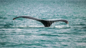 Scotland Now Has A 'Whale Trail' For Spotting Whales On Your Vacation