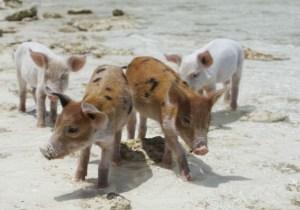 A Wild Anti-Gun Control Tweet Has Everyone Talking About 'Feral Hogs'