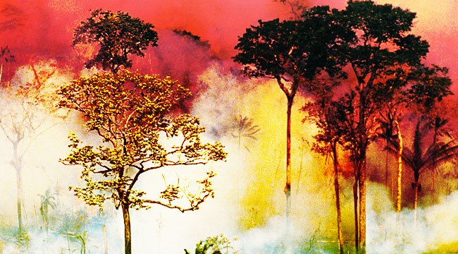A Fire In The Amazon — An Explainer