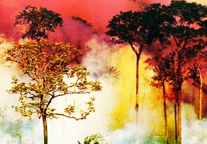 The Fires Burning Up The Amazon — An Explainer