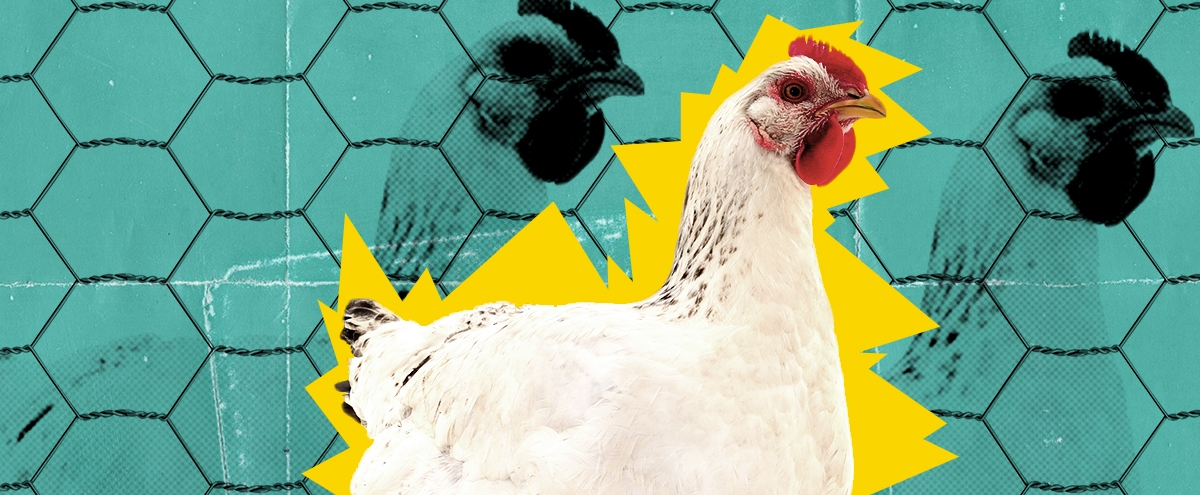 Morgan Spurlock Is Back To Help Lead The Fight Against Big Chicken